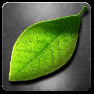 Fresh Leave